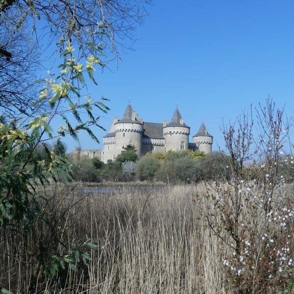 Château de Suscinio et nature