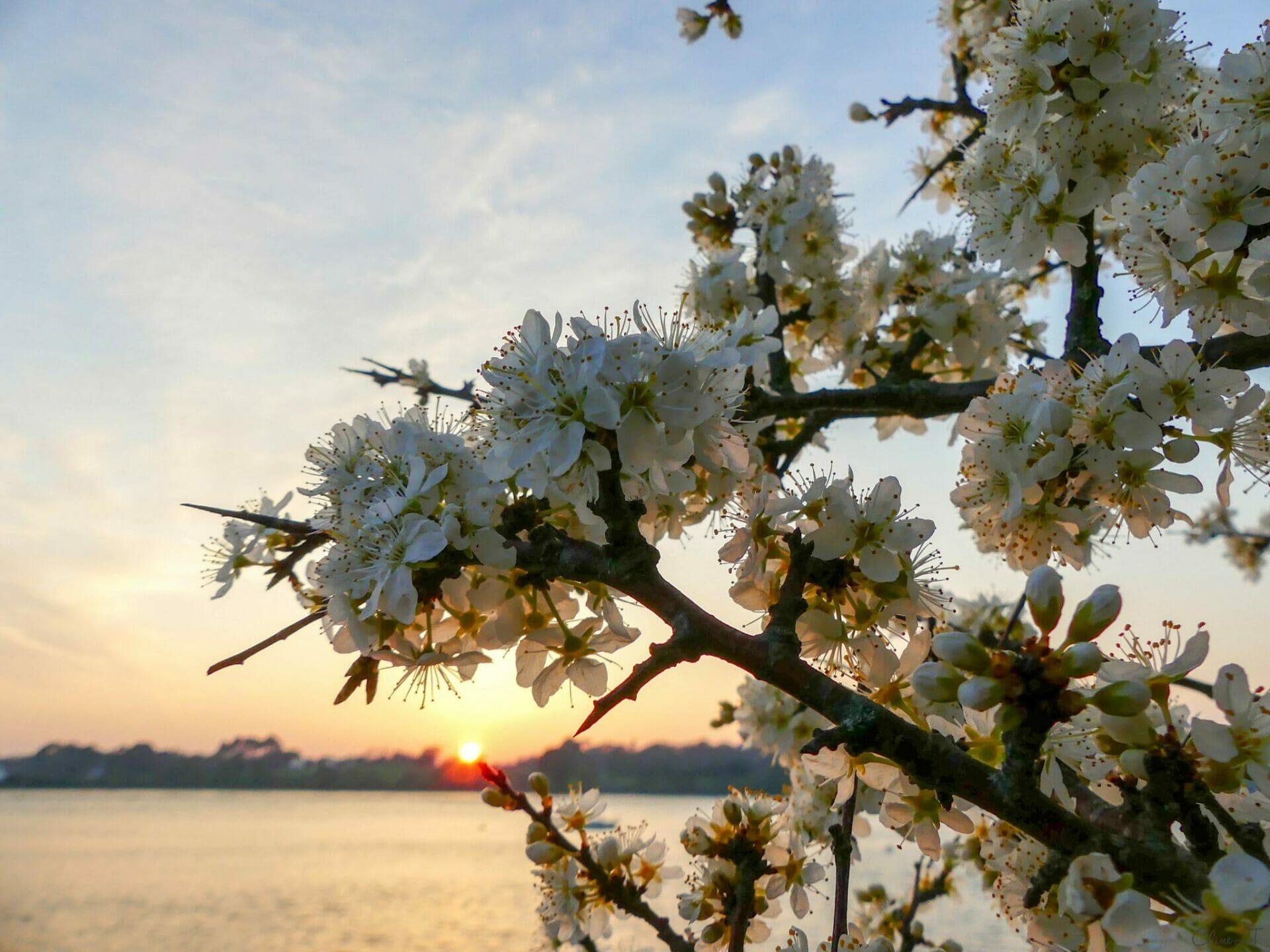 Le golfe du Morbihan au printemps