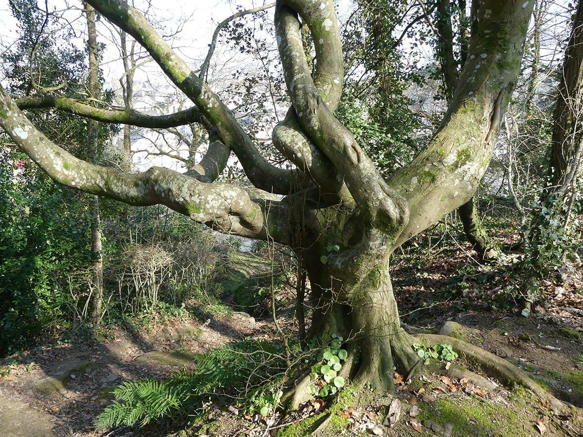 arbre impressionnant