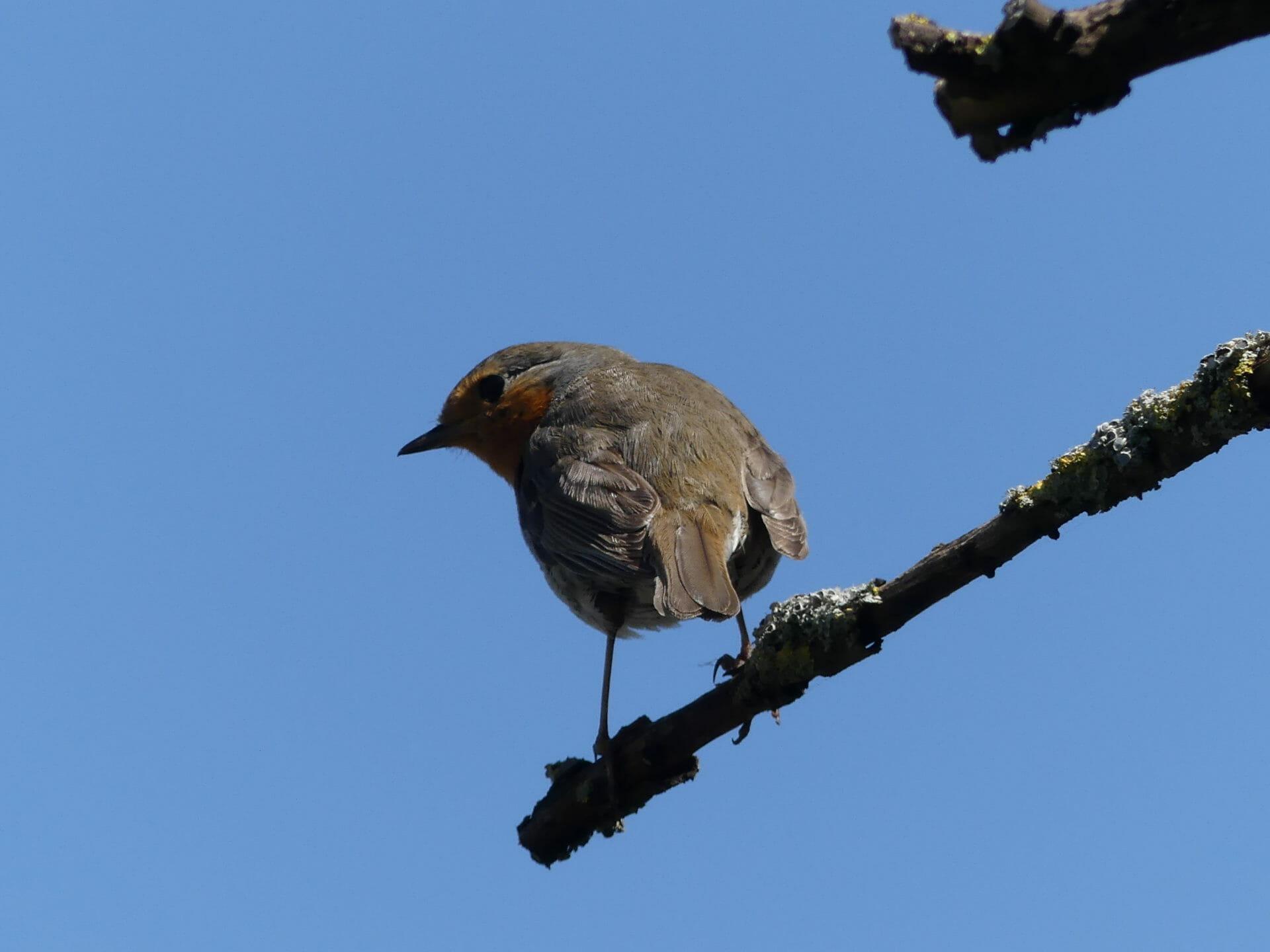Les oiseaux observés dans le Golfe du Morbihan