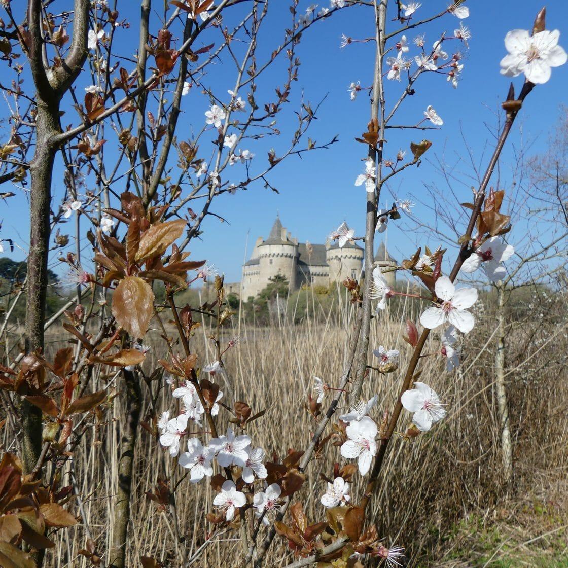 château de Suscino