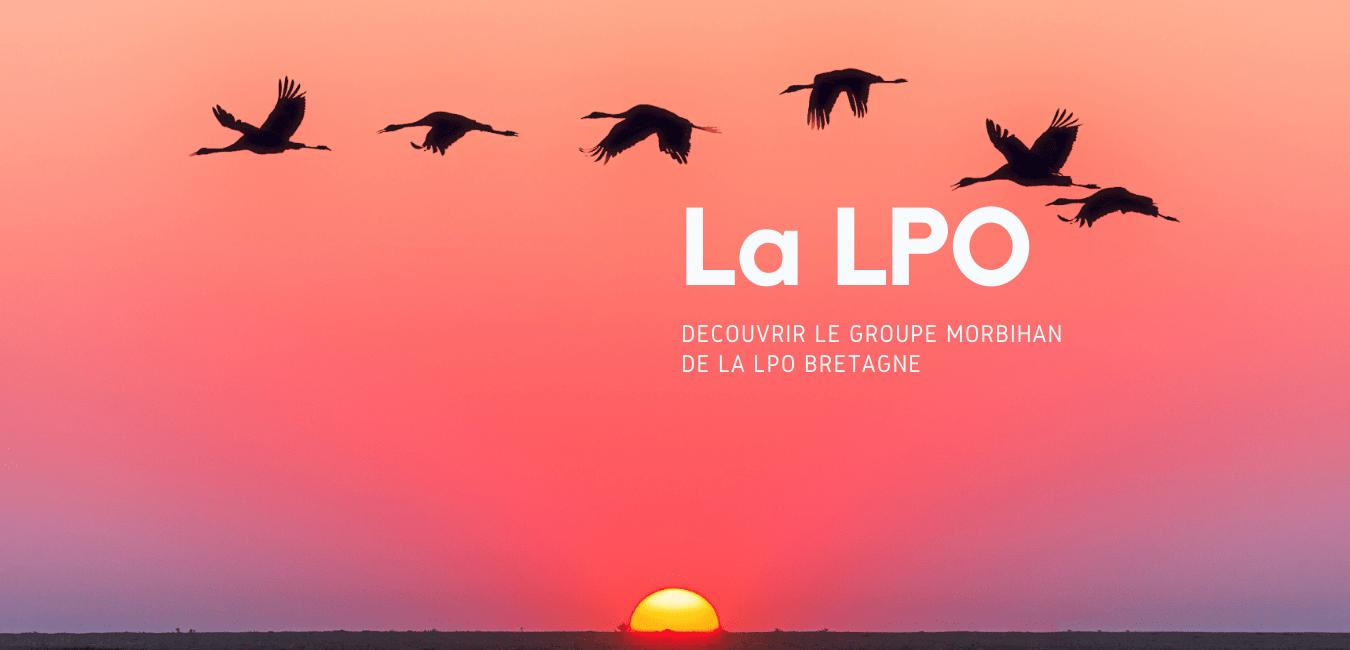 Le groupe LPO Morbihan